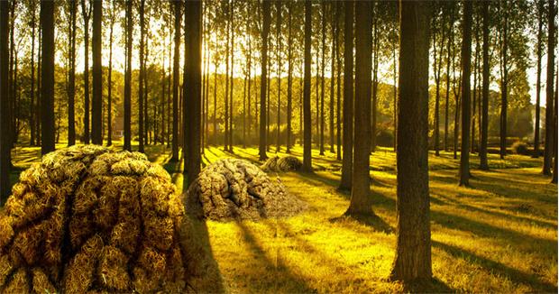Фото №1 - Муравечество. Как мелкие козявки стали влиятельнейшими существами на планете