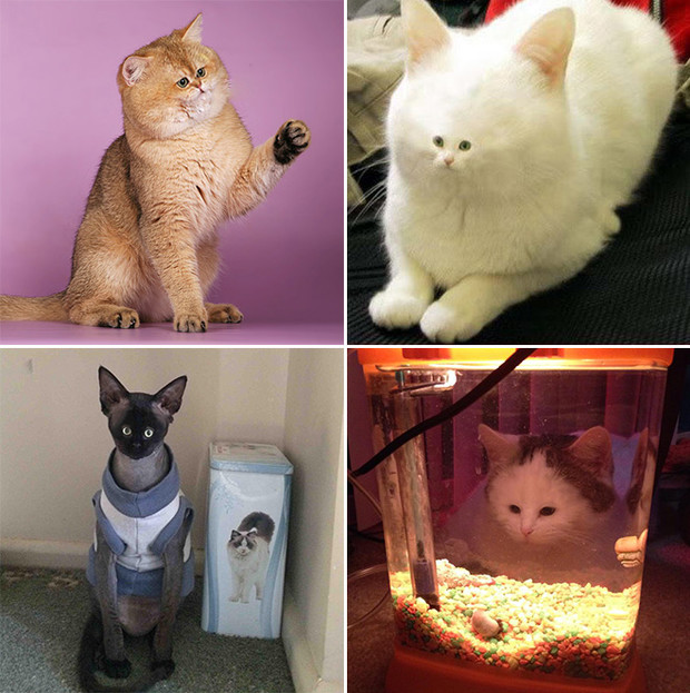 Фото №14 - Коты с крошечными мордами!
