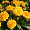 Фото №3 - 10 растений для ленивых садоводов