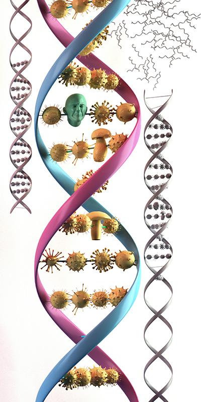 Фото №5 - Миру вирус! Всё, что нужно знать о вирусах, раз уж они занимают 95% биомассы нашей планеты