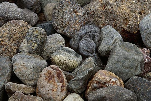 Фото №5 - Мимикрия на максималках: 14 фотографий, на которых умело спрятались животные
