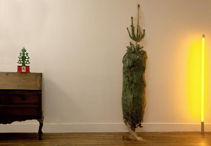 Фото №2 - Срубленную ель можно снова посадить. И вот как это сделать