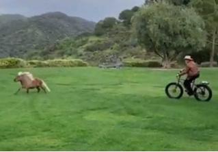 Ничего необычного, просто Арнольд Шварценеггер гоняется на велосипеде за пони (видео)