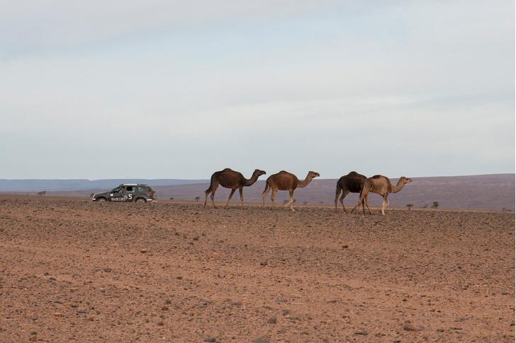 Фото №17 - Renault Duster: до Сахары подбросишь?