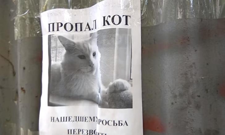 Фото №1 - Российская оптическая иллюзия с объявлением про пропавшего кота покорила мировой Интернет!