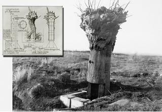 Фальшивое дерево — наблюдательная вышка времен Первой мировой