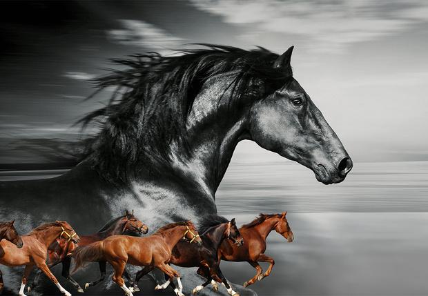 Фото №1 - Неожиданно захватывающая история происхождения лошадиных пород