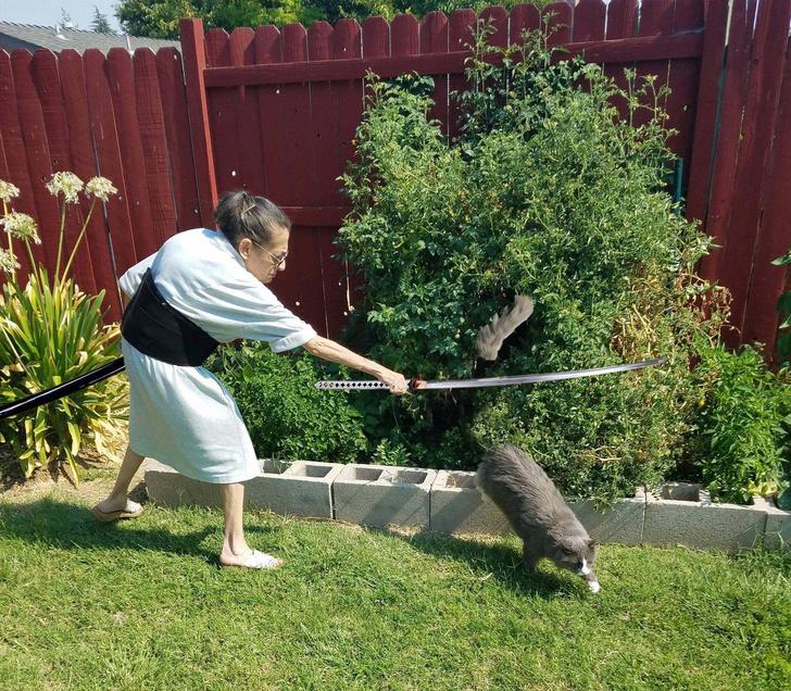 Фото №10 - Очень смешные фотожабы на пожилую женщину, прогоняющую кота