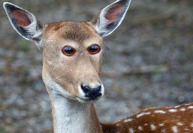 выглядели животные глаза спереди