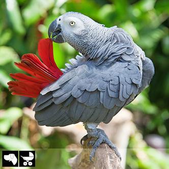 Фото №18 - Как выбрать домашнее животное в зависимости от типа твоего характера и размеров жилплощади