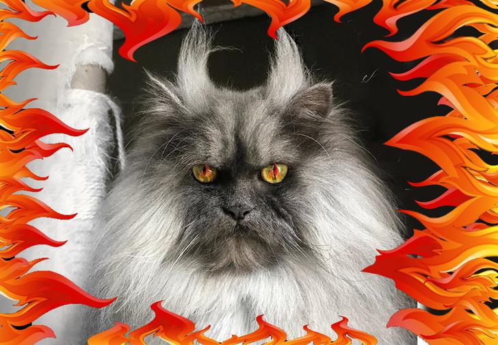 Фото №1 - В Интернете нашли кота-демона