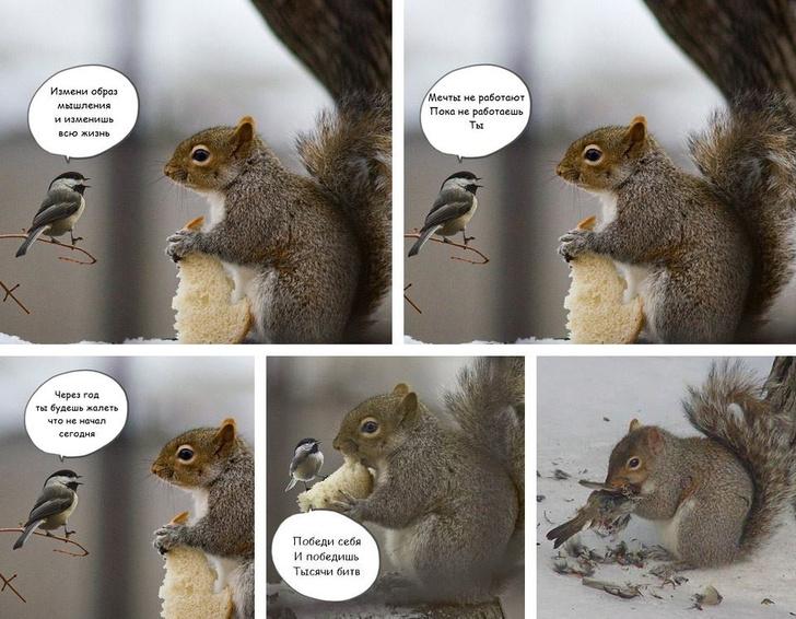 Фото №3 - Самые смешные картинки недели