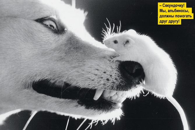 Фото №2 - Переполох в бестиарии: 10 неожиданных фотографий животных с историями