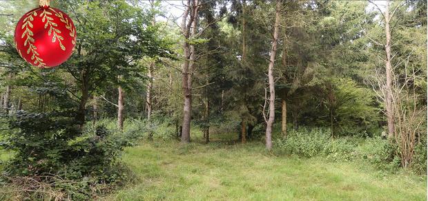 Фото №2 - Найди 6 солдат, притаившихся в густом лесу!