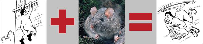 Крыса с хвостом-парашютом