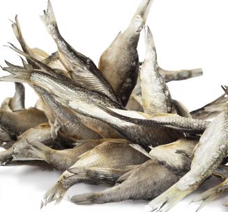 Фото №1 - Коптить рыбу