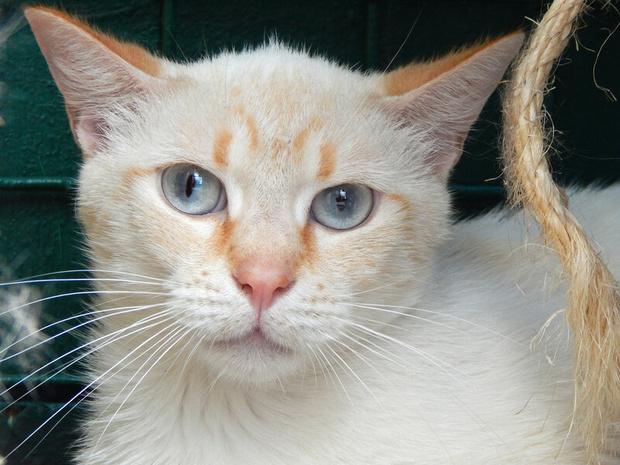 Фото №2 - Котопёс недели: возьми из приюта космического кота Сириуса или игривую собачку Мару