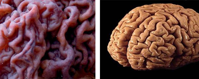 Фото №3 - Фунги сапиенс: почему грибы куда умнее и хитрее, чем мы думали