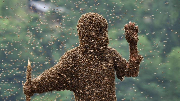 Фото №5 - 5 самых жутких нашествий насекомых в истории