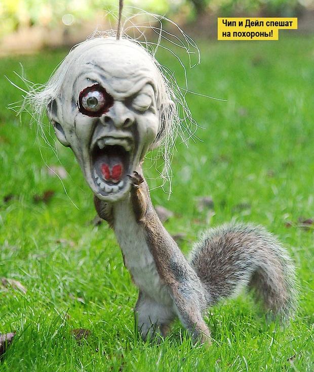 Фото №1 - 13 фото животных, которые тебя рассмешат