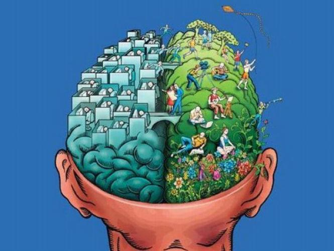 Фото №2 - 8 самых популярных заблуждений о мозге
