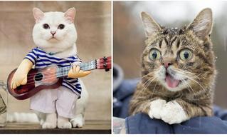 6 котов, у которых больше миллиона подписчиков в «Инстаграме»