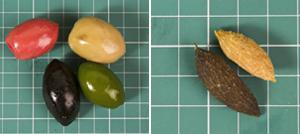 Фото №12 - Мой маленький плод