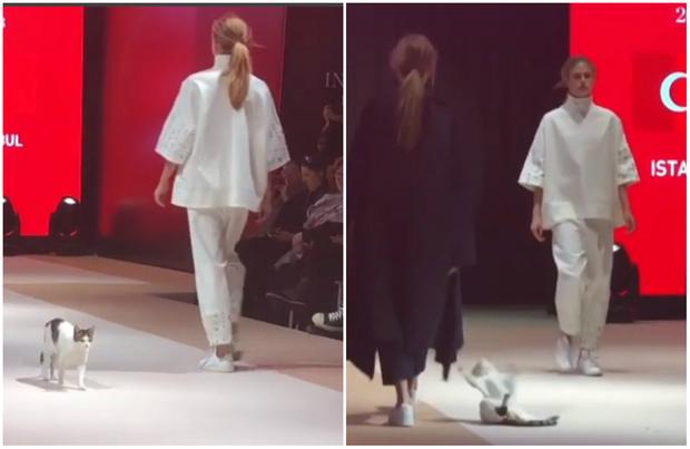 Фото №1 - Кошка забралась на подиум во время показа и составила достойную конкуренцию моделям (видео)