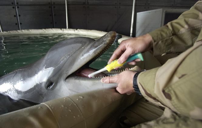 Боевые дельфины