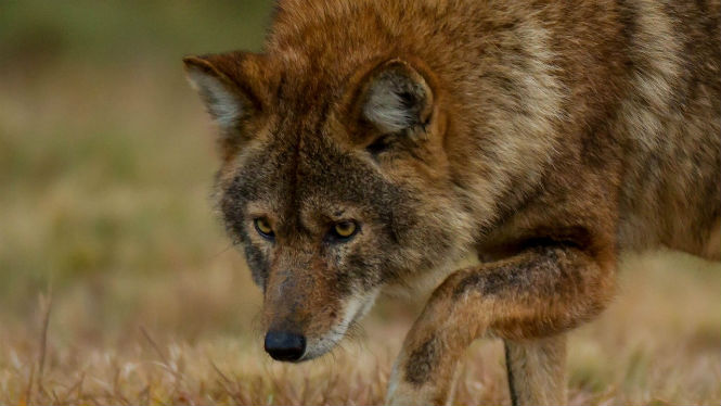 Фото №9 - 13 животных-гибридов, о существовании которых ты не подозревал