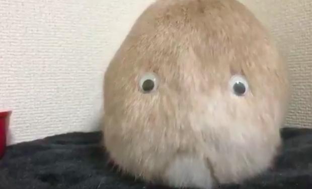 Фото №1 - Японец приделал кролику глаза на задницу, и получился самый милый монстр в Интернете (ВИДЕО)