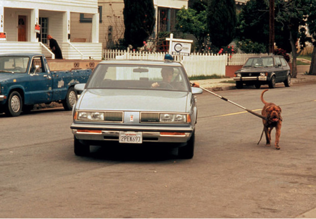 Фото №1 - Как приучить собаку к машине