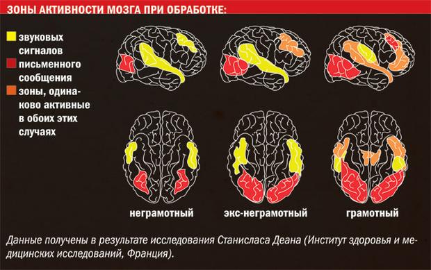 Фото №2 - Новое про чтение: как умение читать повлияло на физиологию людей