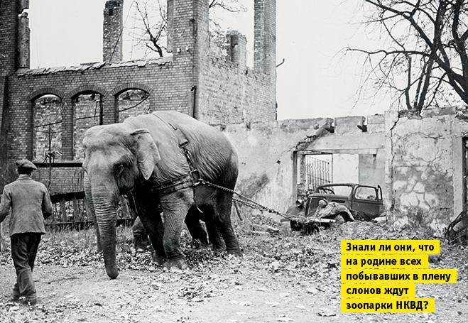 Фото №12 - Слонопотамия. 13 фотоисторий из жизни слонов
