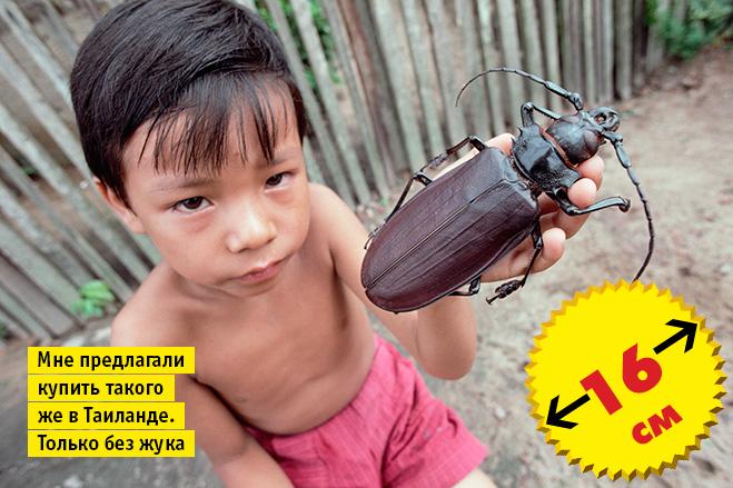 Фото №4 - Кто сказал «Вау!»: шокирующе огромные животные-переростки