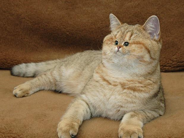 Фото №9 - Коты с крошечными мордами!