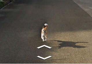 Собака преследовала машину Google и настойчиво портила снимки