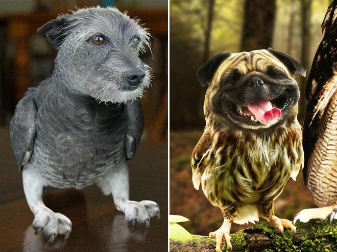 Фото №1 - Что получится, если скрестить собак и сов: 20 фотоэкспериментов