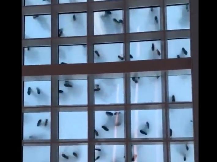 Фото №1 - Сколько мух ты видишь в этом видео? Вирусная оптическая иллюзия