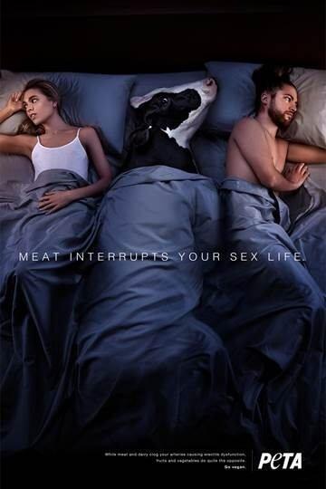 Фото №1 - Защитники животных озадачили Интернет своей странной рекламой