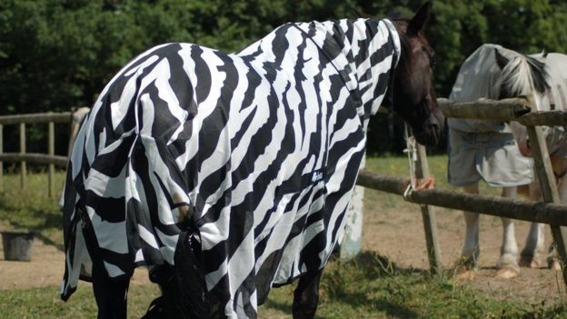 Фото №2 - Ученые наконец разгадали, зачем зебрам полоски