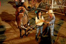 Рога и ковбои