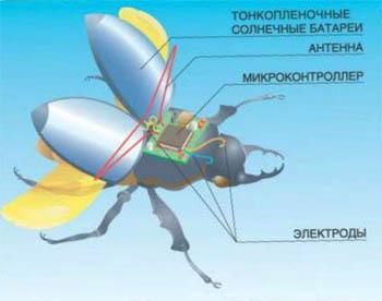 Фото №1 - Легко: распознать жука-киборга