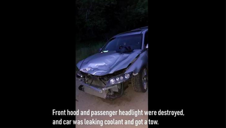 Фото №1 - Водитель врезался в пуму и вдребезги разбил машину. А пума просто убежала