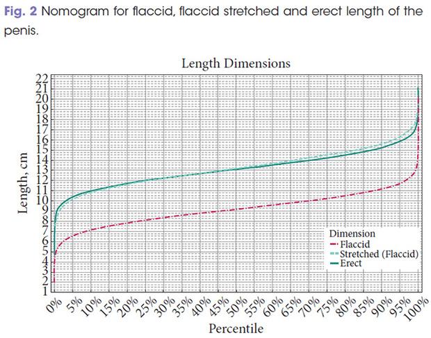 График длины пенисов