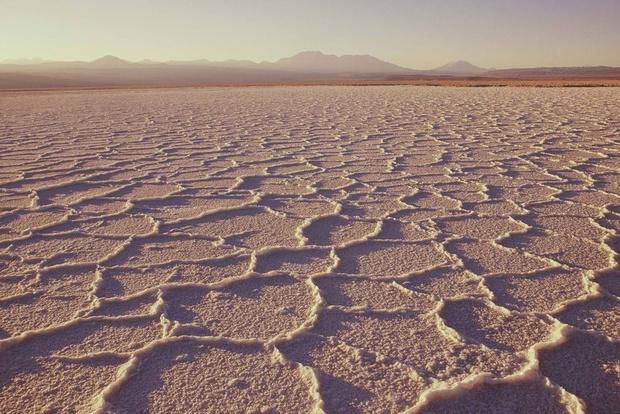 Фото №1 - В самом засушливом месте на Земле прошел дождь и уничтожил все живое