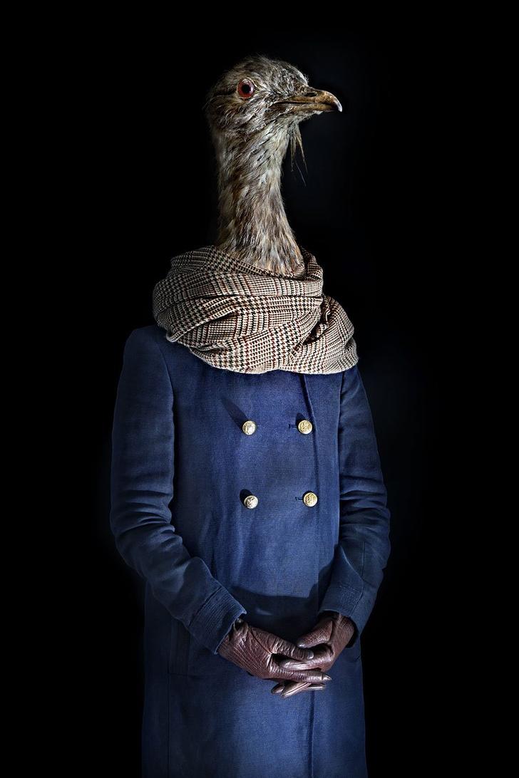 Фото №6 - Так вот как выглядит конь в пальто!