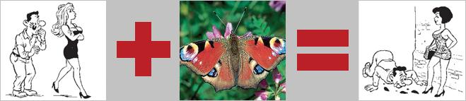 Бабочка-павлиний глаз и феромоновый нюх