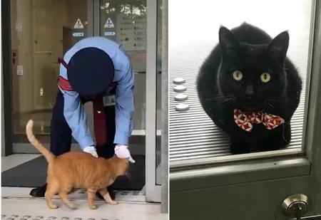 Эпическая повесть о двух котах, которые уже два года пытаются проникнуть в музей