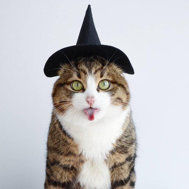 Фото №1 - Кот, который языком вытворяет тако-о-ое! Смотри и учись!